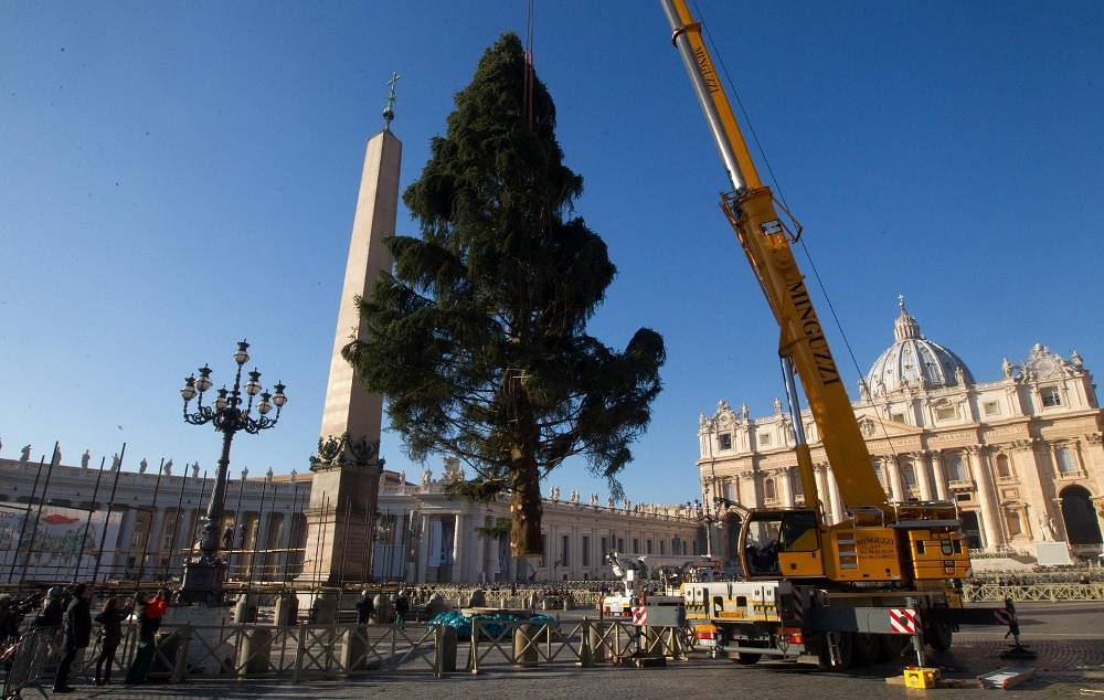Christmas tree in the Vatican
