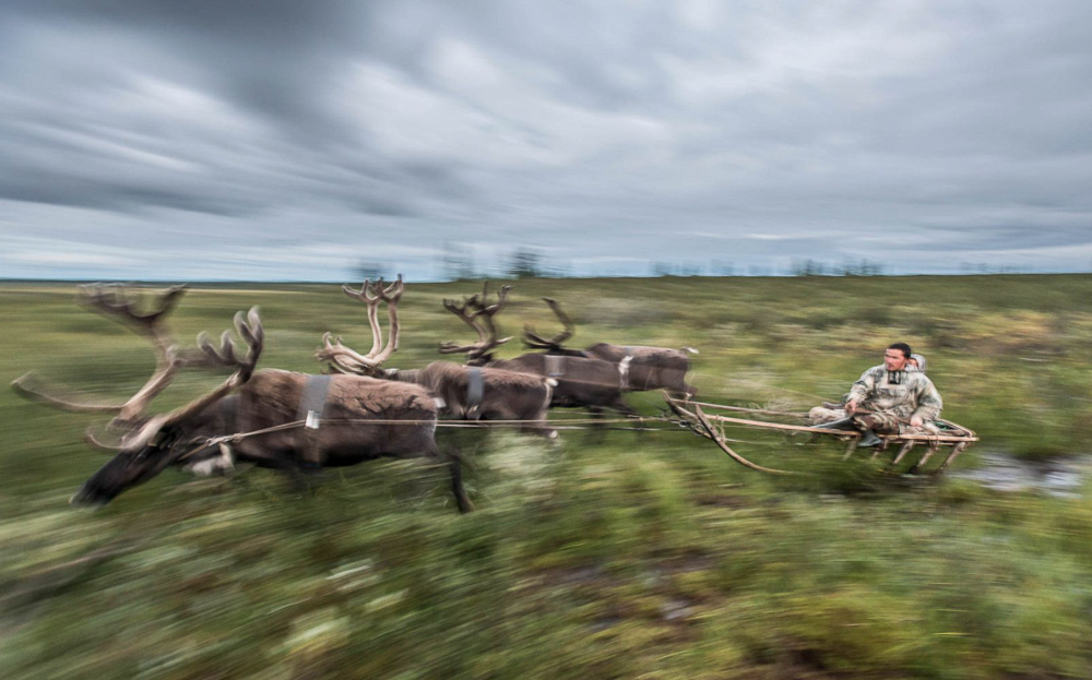 Multi-purpose transport, by Daniil Khusainov. Photo: Reindeer team, Yamalo-Nenets Autonomous Okrug