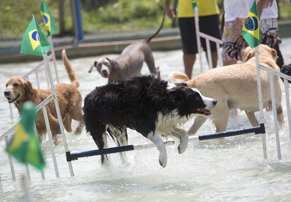 Dogs compete in the jumping competition during the Dog Olympic Games in Rio de Janeiro, Brazil, September 18