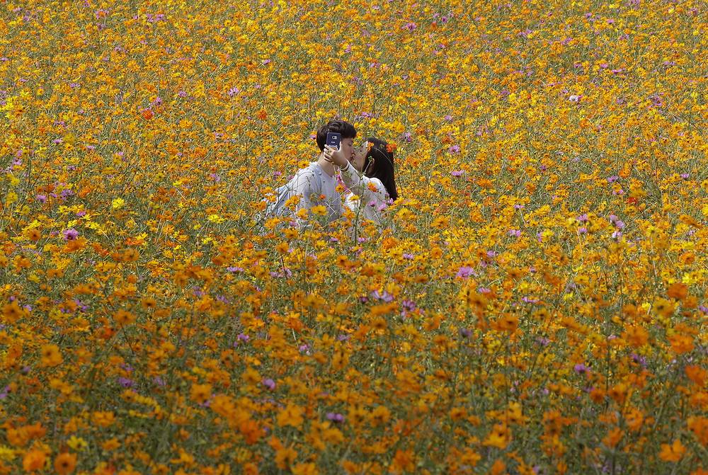 A couple in the middle of a cosmos field at Olympic Park in Seoul, South Korea, September 21
