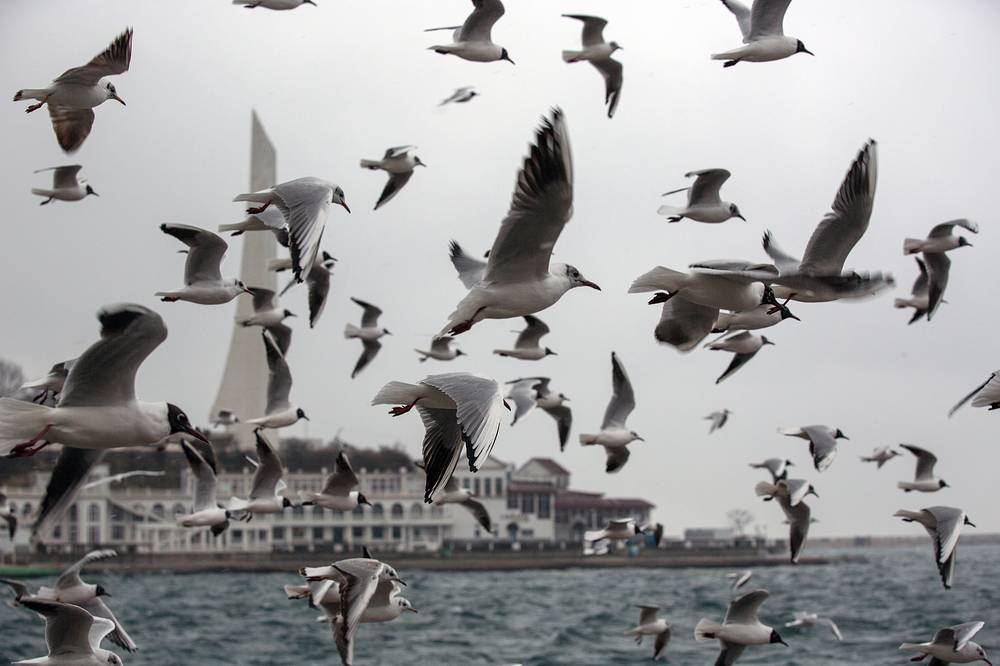 Seagulls tend to stop flying and take refuge at the coast if a storm is coming