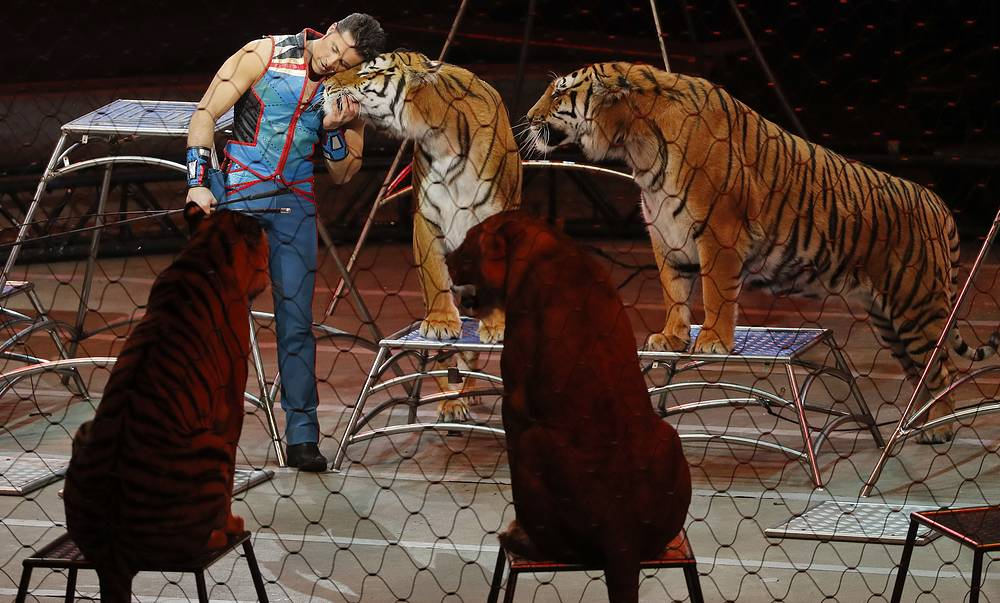 Big cat trainer Alexander Lacey hugs one of the tigers during the final show of the Ringling Bros. and Barnum & Bailey Circus in Uniondale, USA, May 21