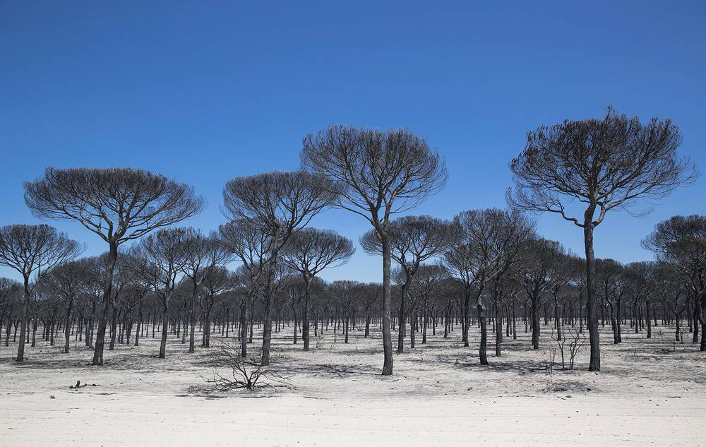 A view on the area of forest fire in Magazon, Huelva, Andalusia, southern of Spain, June 26