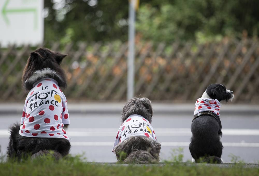Three dogs with cycling jerseys sit near a road in Mettmann, as the second stage of the Tour de France cycling race from Duesseldorf to Liege in Belgium runs through Mettmann, Germany, July 2