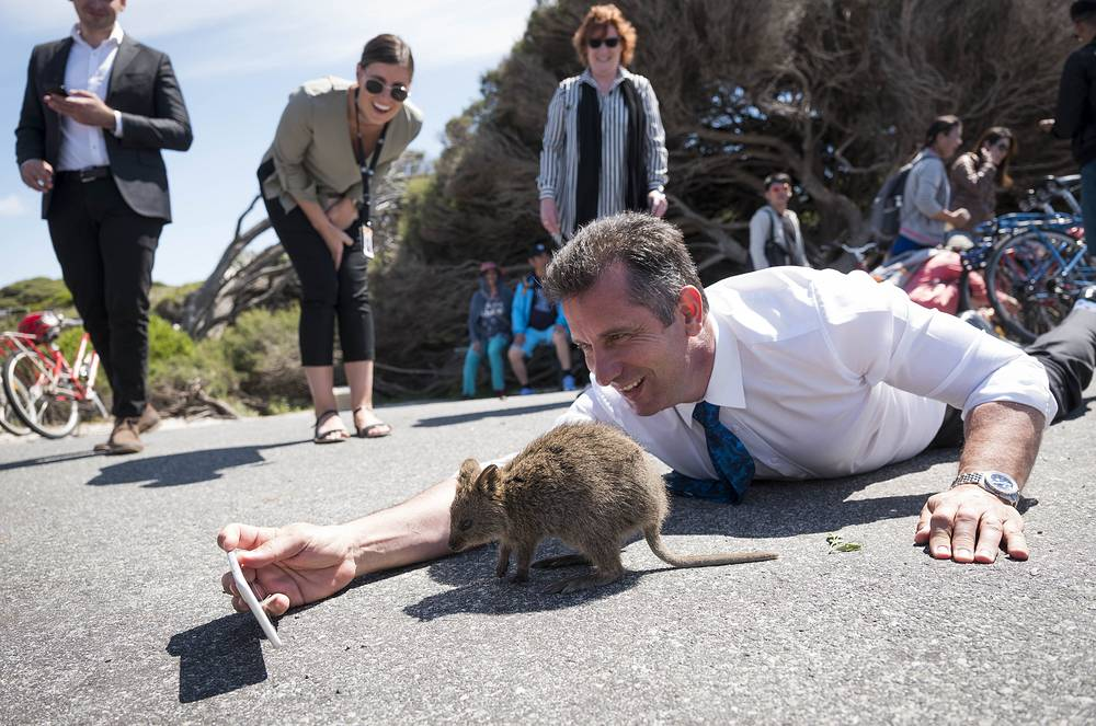 Western Australian Tourism Minister, Paul Papalia, tries to take a selfie with a quokka during a visit to the holiday island, Rottnest off the West Australian Coast, October 24