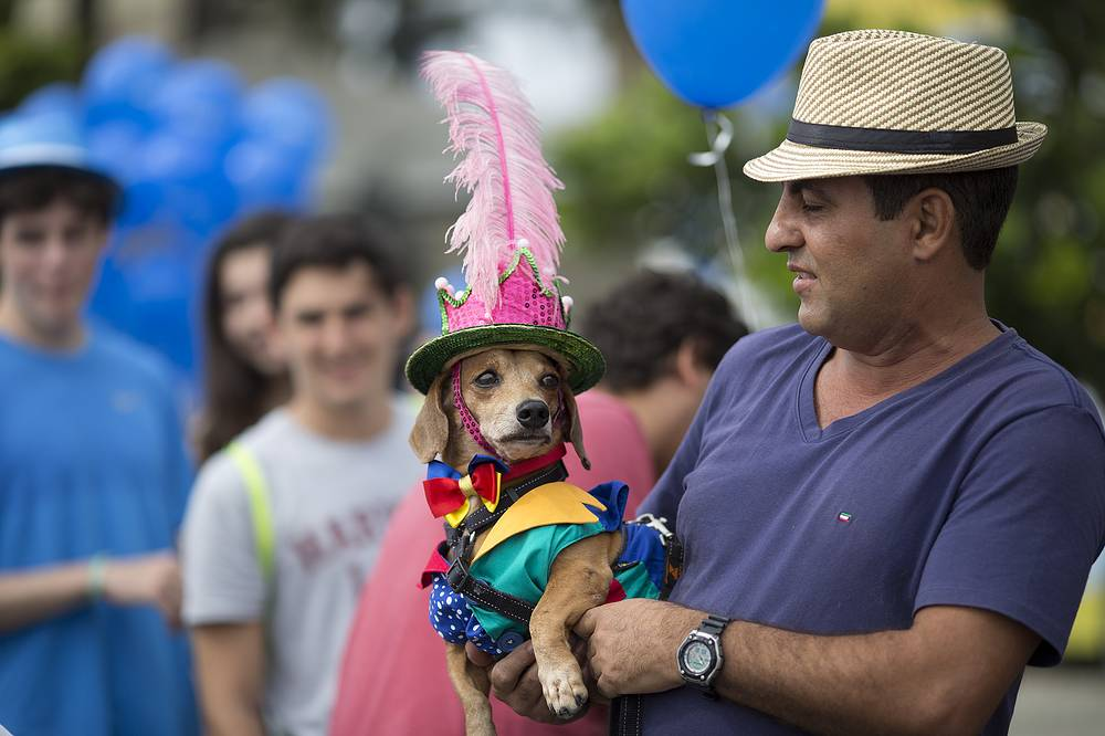 Dog is decked out in costume for the Blocao dog carnival parade along Copacabana beach in Rio de Janeiro