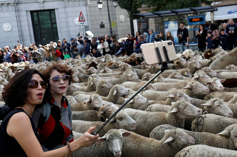 Women take a selfie next to a flock of sheep during the annual sheep parade through Madrid, October 21. Shepherds parade their flocks through the city every year in order to exercise their right to use traditional routes to migrate their livestock from northern Spain to winter grazing pastureland in southern Spain