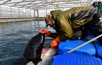 International scientists urge access to 'whale prison' in Russia's Far East
