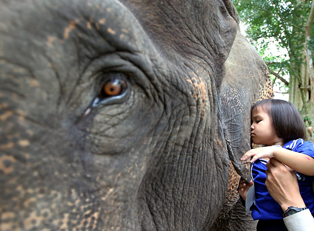 The elephant treatment program for disabled children with developmental disabilities is designed to improve specific motor skills