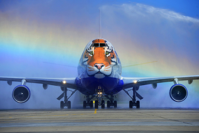Transaero Boeing 747-400 with a face of an Amur tiger painted on its nose cone at Vladivostok International Airport, September 26, 2015