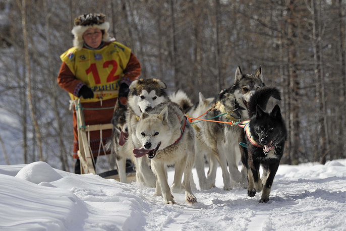Kamchatka's traditional dog sled race Beringiya