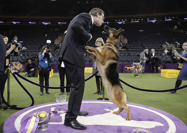Rumor, a German shepherd, leaps to lick her handler and co-owner on the face after winning Best in Show at the 141st Westminster Dog Show