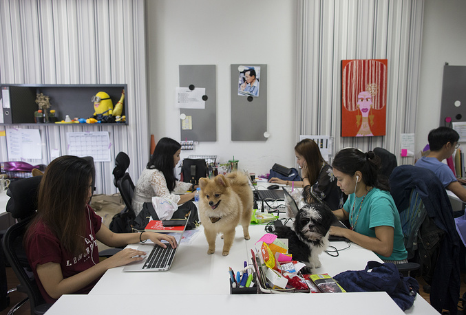 Thai staffs work with their dogs at the office of Adyim, a digital marketing solution company in Bangkok, Thailand, June 7