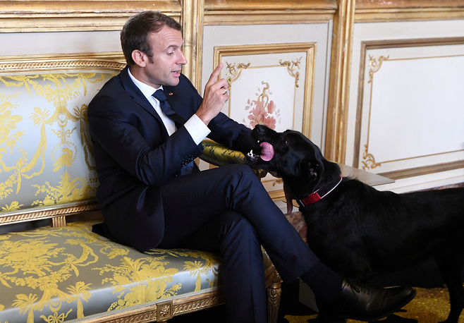 French president Emmanuel Macron gestures towards his dog Nemo during a meeting with German Vice Chancellor and German Foreign Minister at the Elysee Palace in Paris, France, August 30