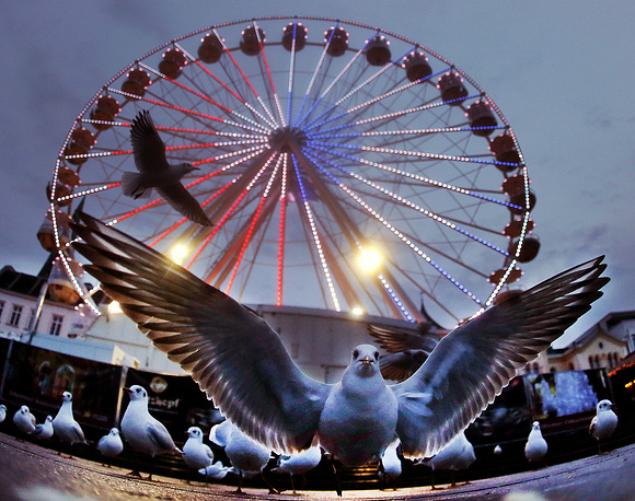 A seagull sits in front of a ferris wheel at the Christmas market in Schwerin, Germany, December 27