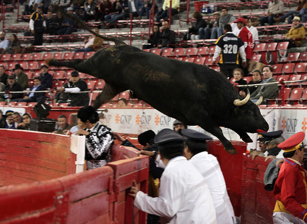 The bull 'Trueno' weighing 555 kilograms jumps over a barrier during the eighth corrida of the Temporada Grande in Mexico City, Mexico, January 7