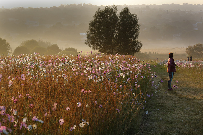 Cosmos flowers are seen as the sun rises over Delta Park in Johannesburg, South Africa, March 28
