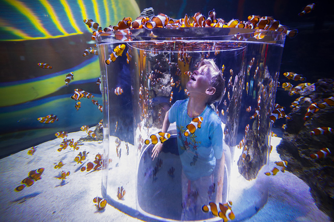 A boy observes Clownfish swimming in an emmersive display at the 'Two Oceans Aquarium' in Cape Town, July 22. The Two Oceans Aquarium is Africa's most advanced aquarium with a strong focus on marine conservation, rehabilitation and education