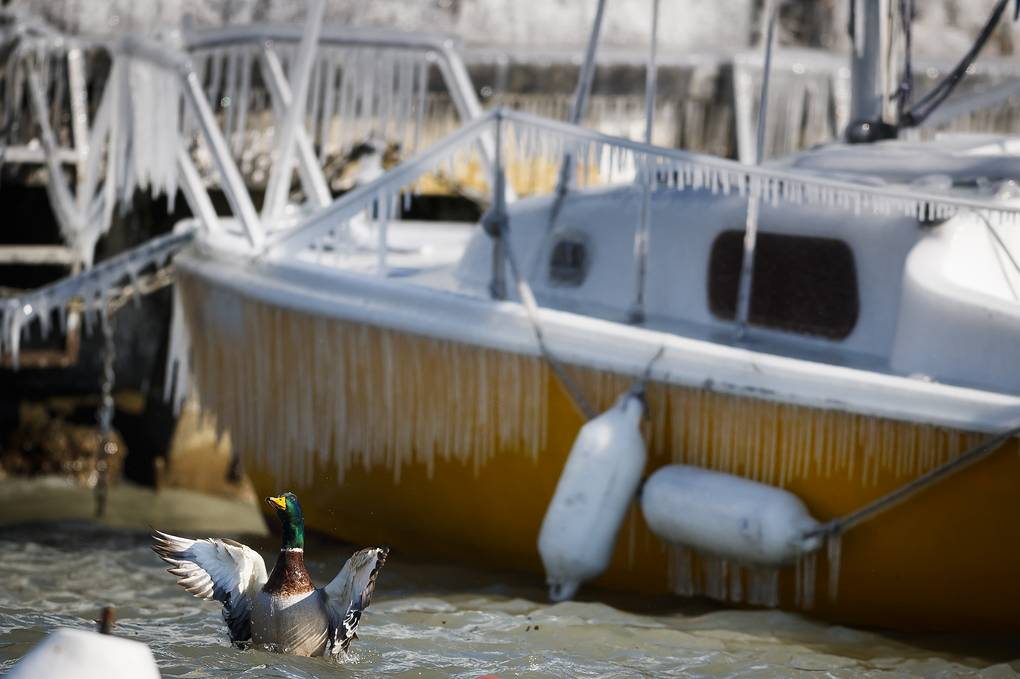A duck lands next to an icy boat on the frozen shore of Lake Geneva during a windy winter day, in Versoix, Switzerland, 26 February 2018. Media reports state that extreme cold weather is forecast to hit many parts of Europe with temperatures plummeting to a possible ten year low. EPA-EFE/VALENTIN FLAURAUD