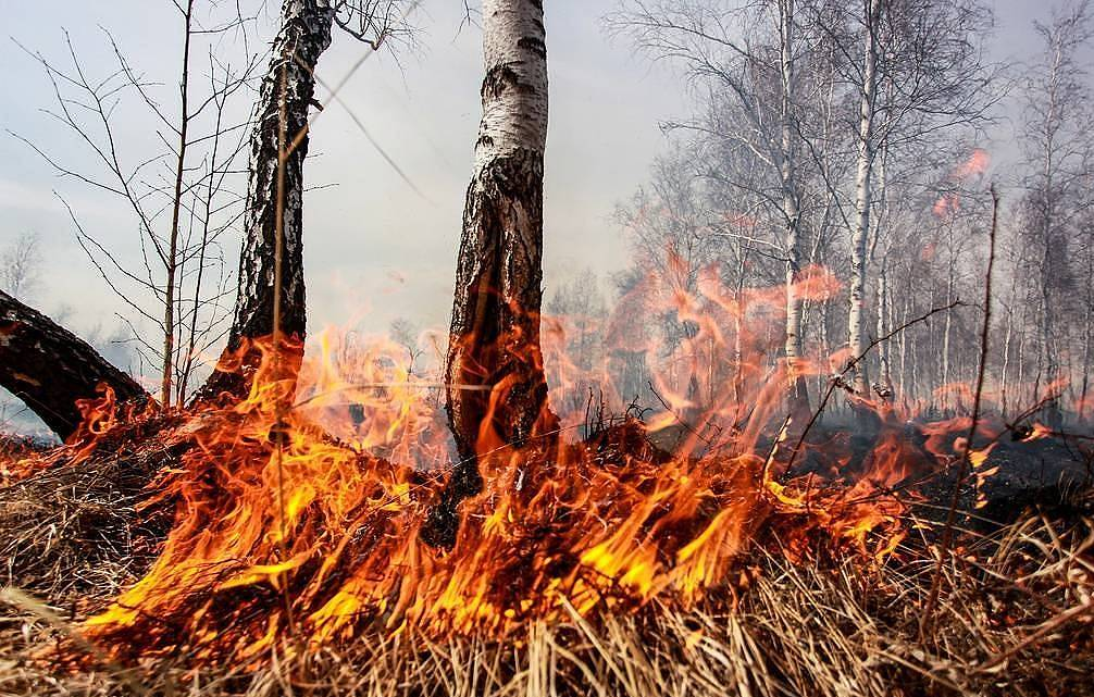 Nearly 70 wildfires extinguished in Russia over past day