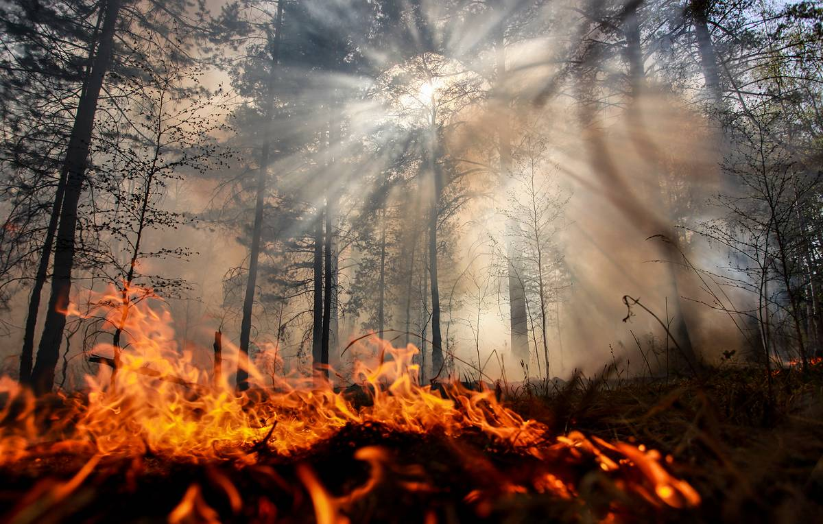 Wildfires sweep through 183,000 hectares in Russian regions