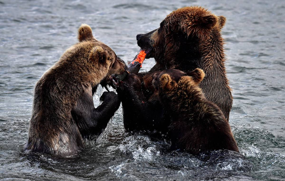 'Hungry bear' incursion suspends popular tourist route in Russia's Far East
