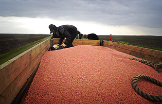 Sowing soybean seeds in fields of a farm in the village of Khorol in Russia's Far East
